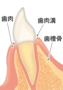 歯ぐきが健康な状態