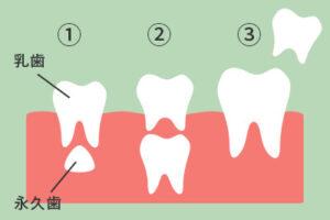 歯の生え変わりの流れ
